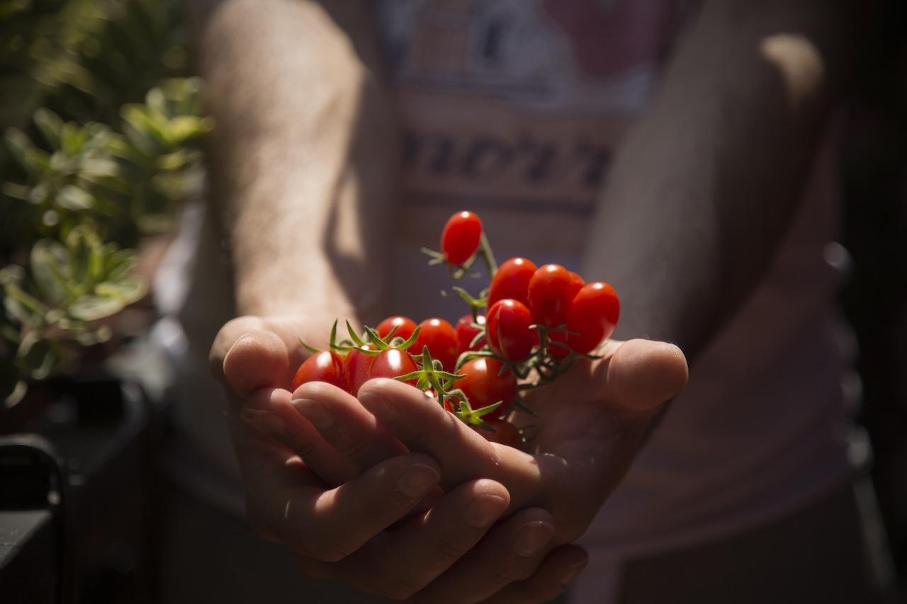 tomato small